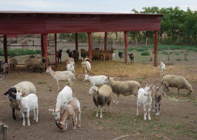 állattartó telep 1