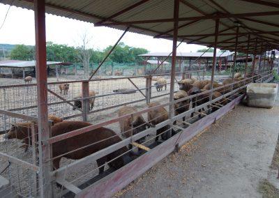 állattartó telep 2